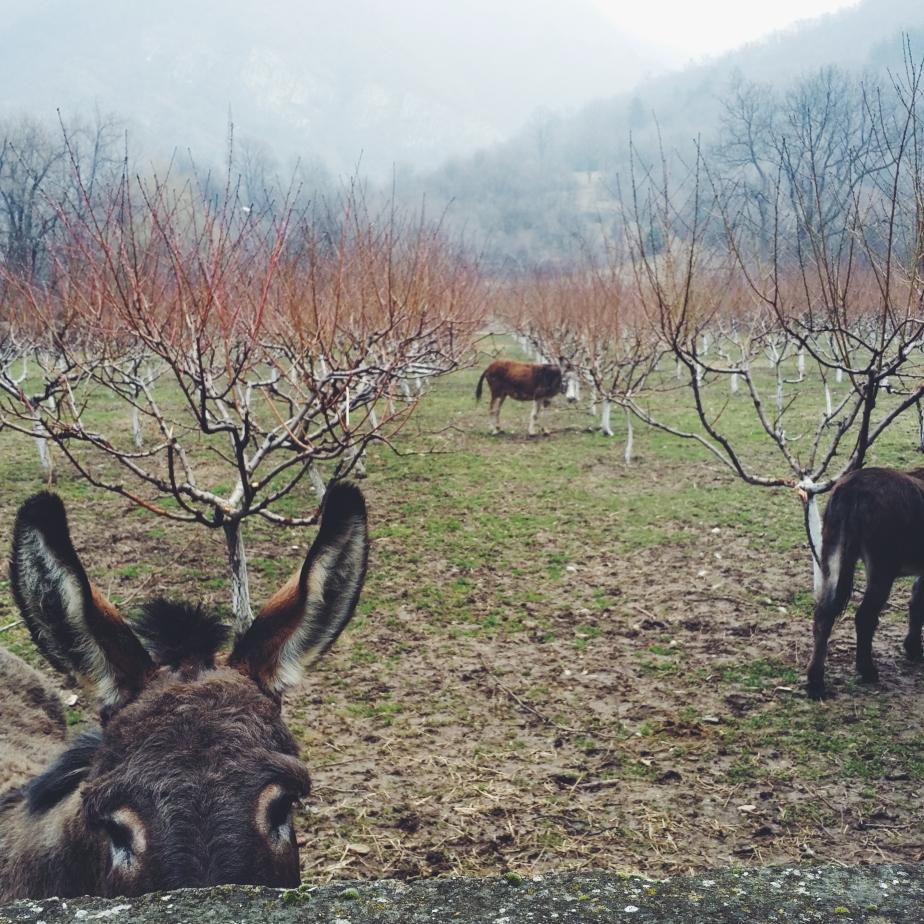 Snapshots of Bulgaria