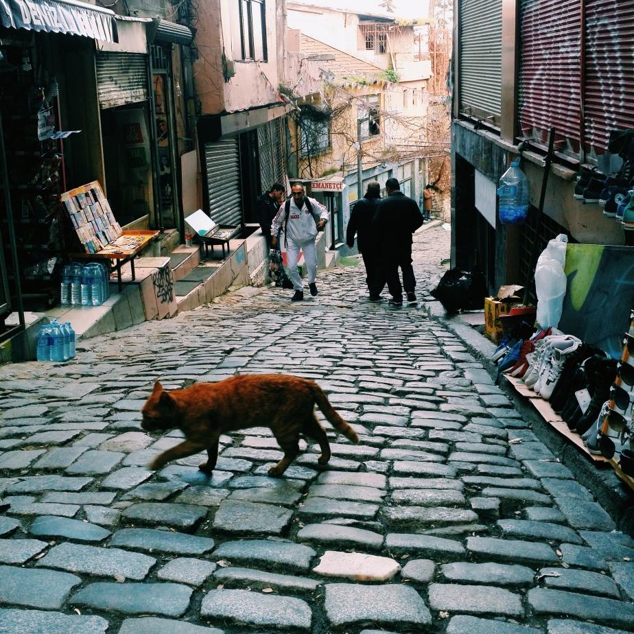 Snapshots of Istanbul from Rose Caravan